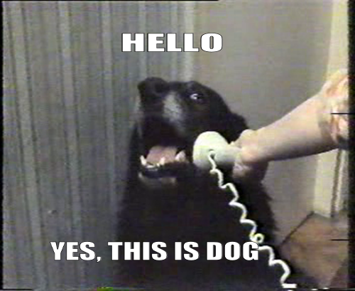 hello-this-is-dog